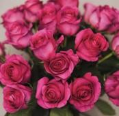 Букет Розы в конусе, розовая Готча